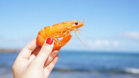 a shrimp