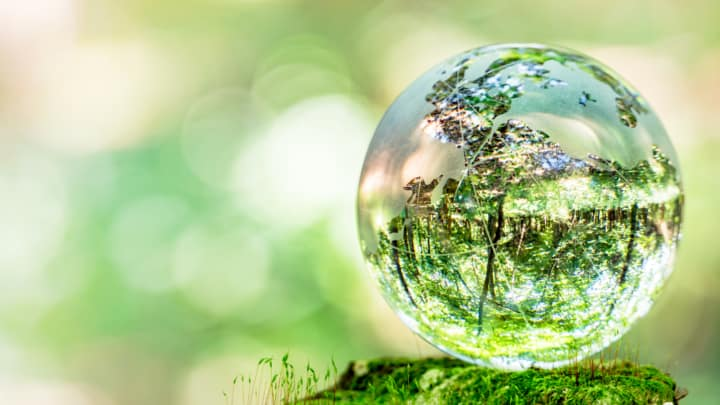 Glass globe photographed in a moth forest